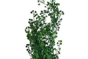Photograph of Artificial Greenery - Hanging Hedging
