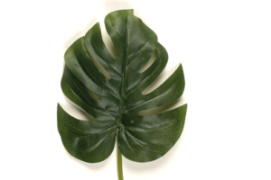 Photograph of Artificial Greenery - Monstera Leaf