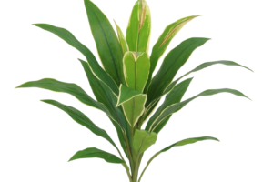 Photograph of Artificial Greenery - Cordyline Leaf Cluster